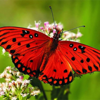 Nature Jigsaw Puzzle - Butterfly